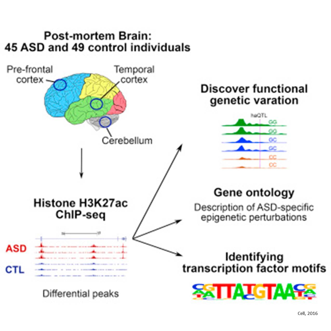 Shared epigenetic changes underlie different types of autism