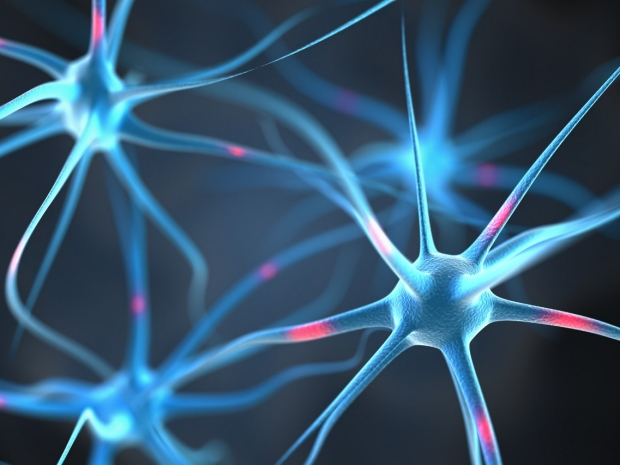 How to make a motor neuron?