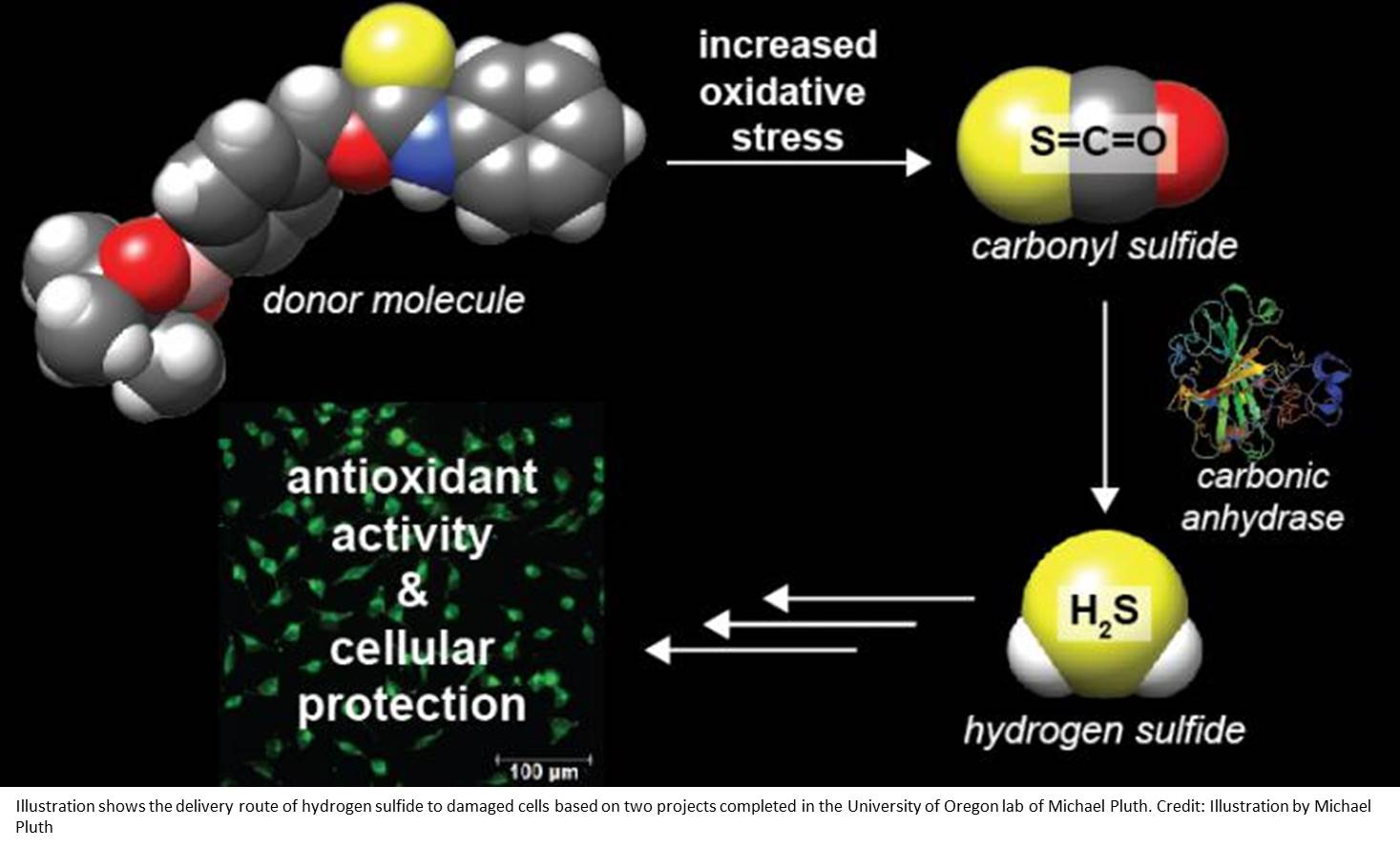 New class of hydrogen sulfide donor molecules