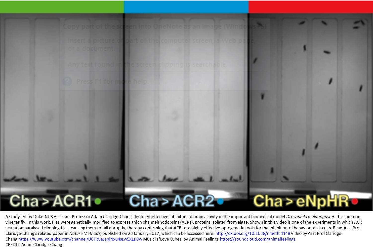 Optogenetic tool that inhibits neural activity