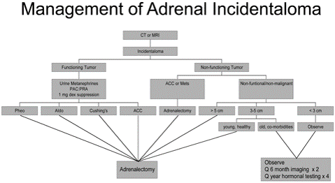 Researchers isolate novel urinary biomarkers that may indicate adrenal cancer