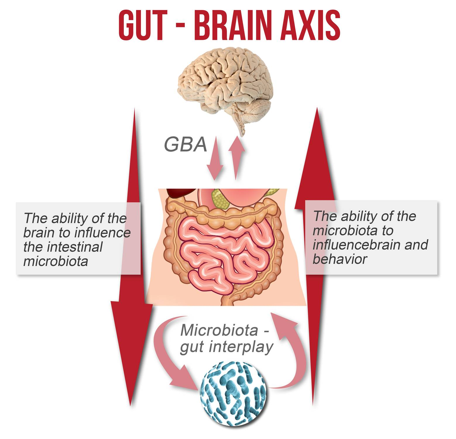 Intestinal bacteria alter gut and brain function