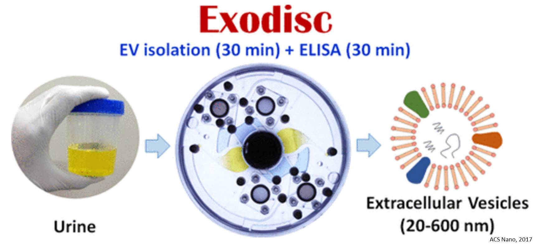 Extracellular vesicle isolation from urine and bladder cancer detection using lab-on-a-disc platform