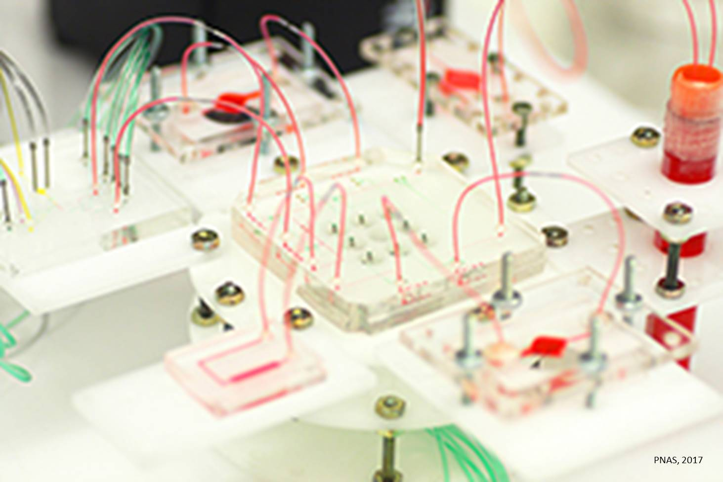 Multisensor-integrated organs-on-chips platform