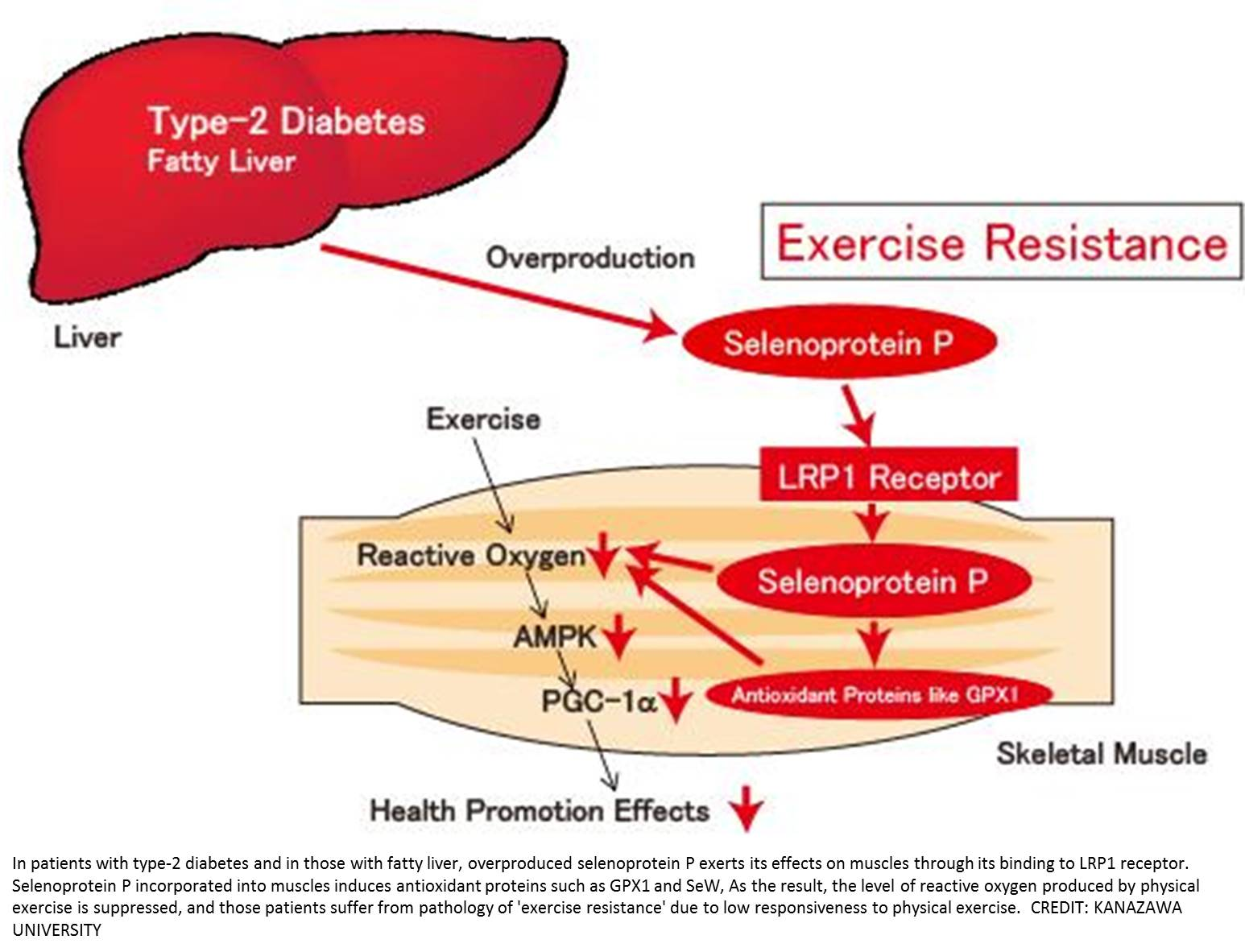 Why does the same exercise exert effects on individuals differently?