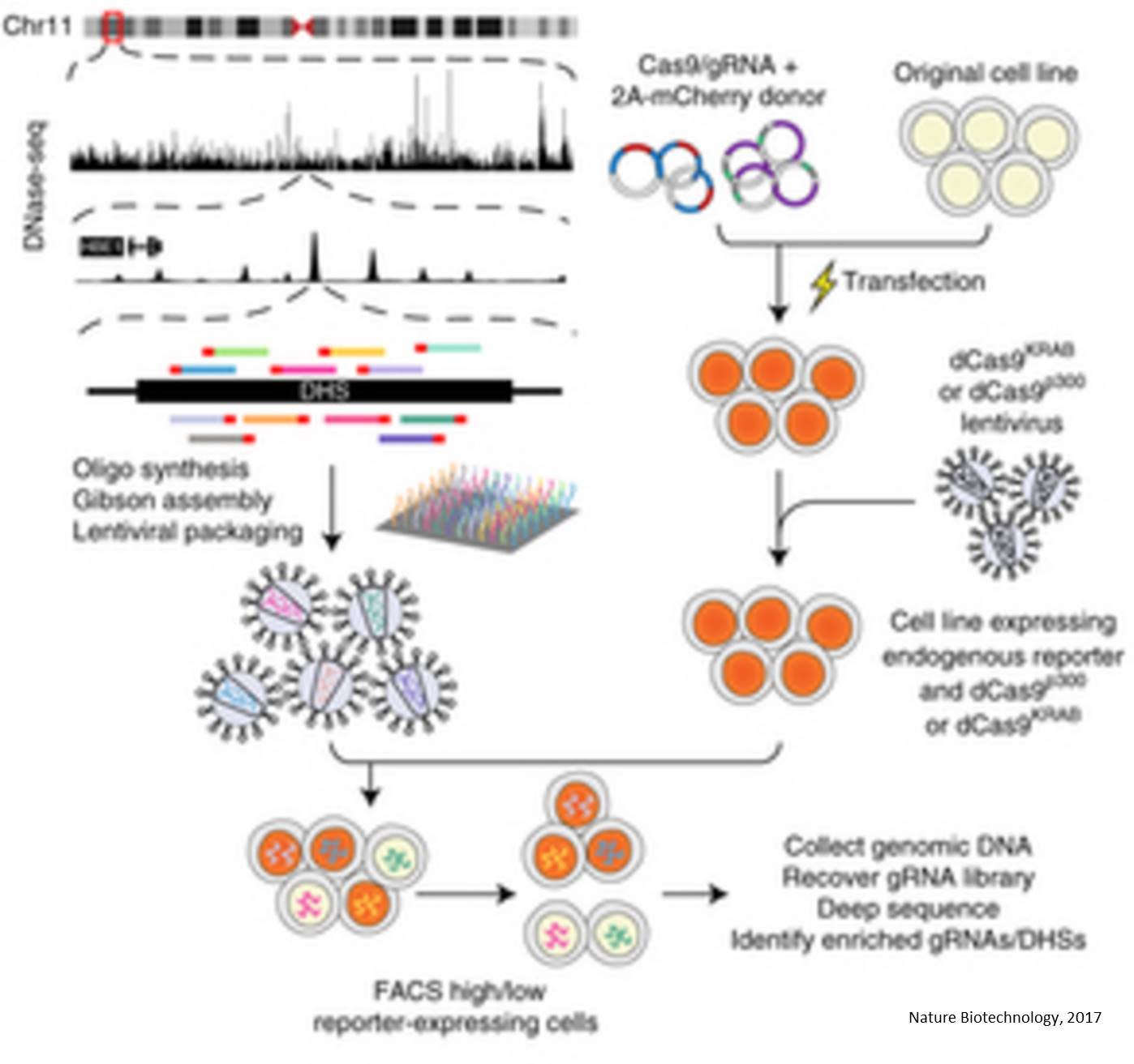 Screening non-coding genome to identify genetic diseases!