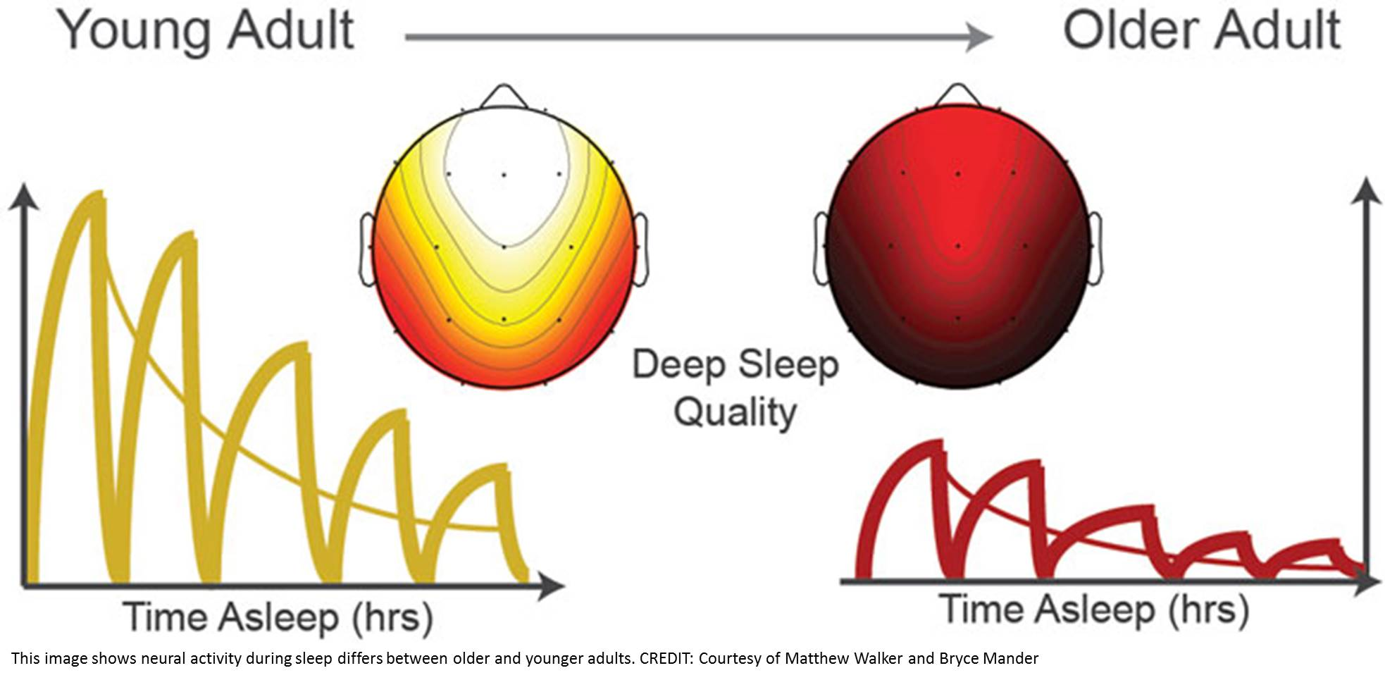 Sleep Differences in Older and Younger Adults