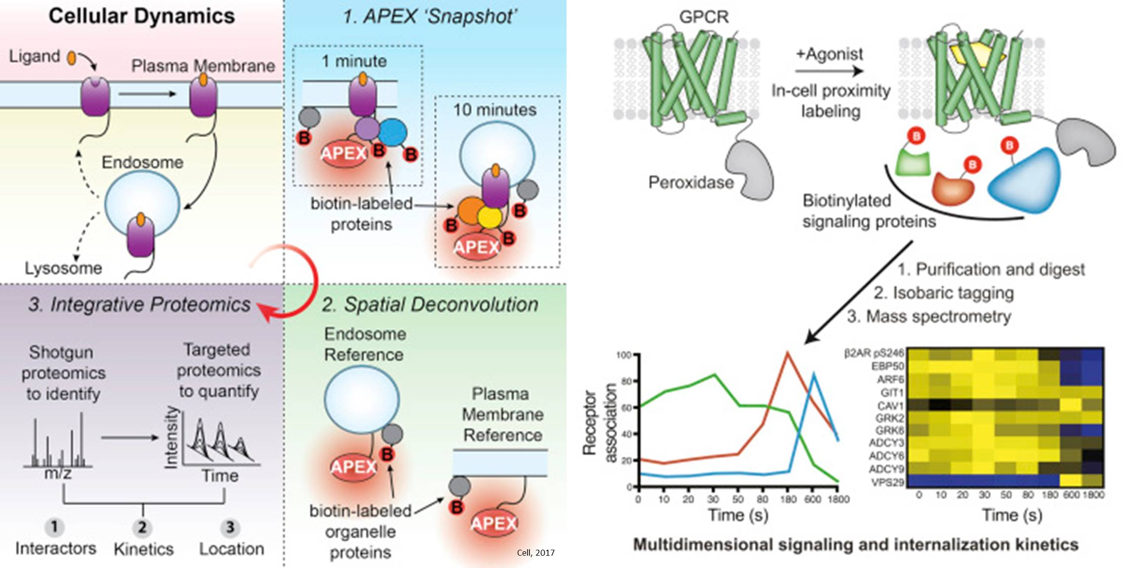 A New Technique to Spatiotemporally Resolve Protein Interaction Networks in Living Cells