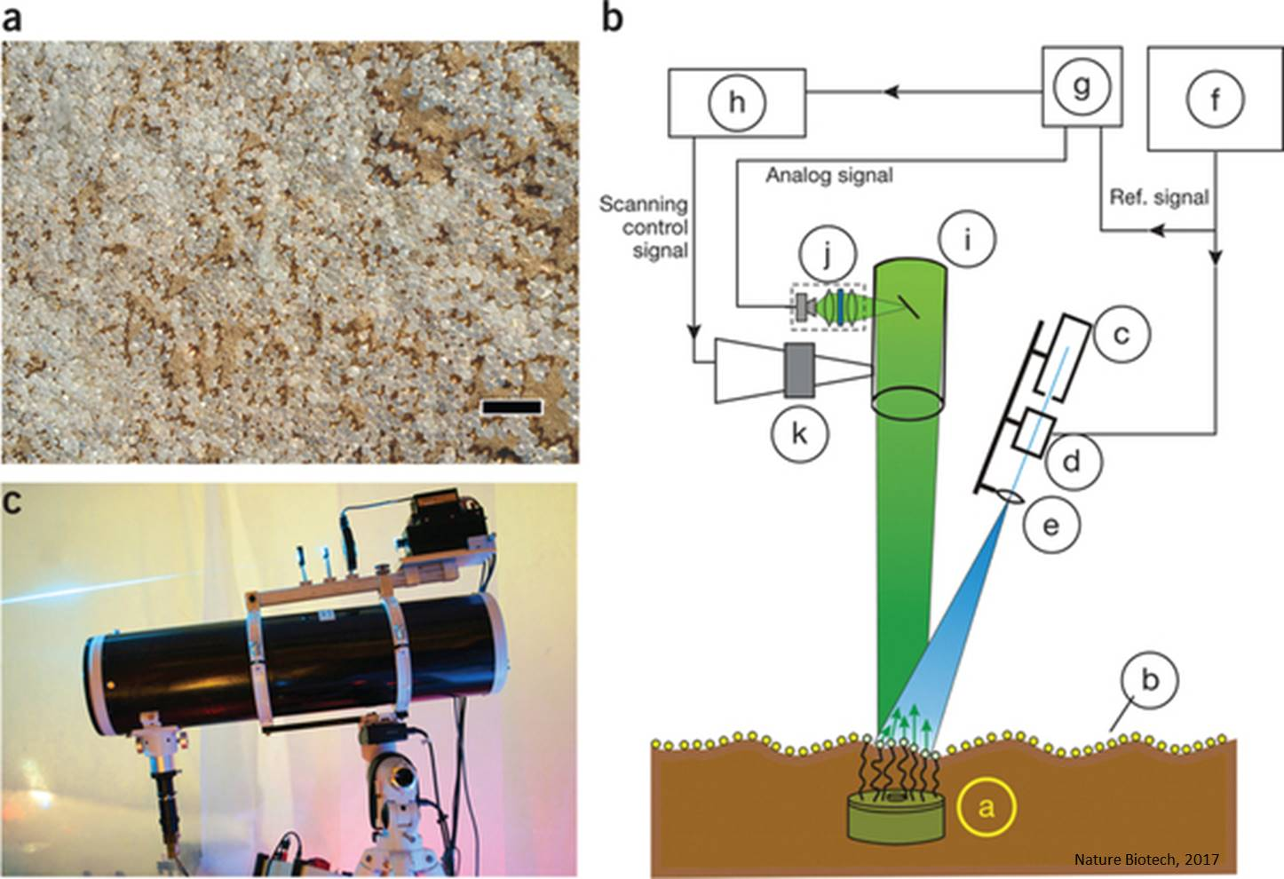 Remote detection of buried landmines using a bacterial sensor