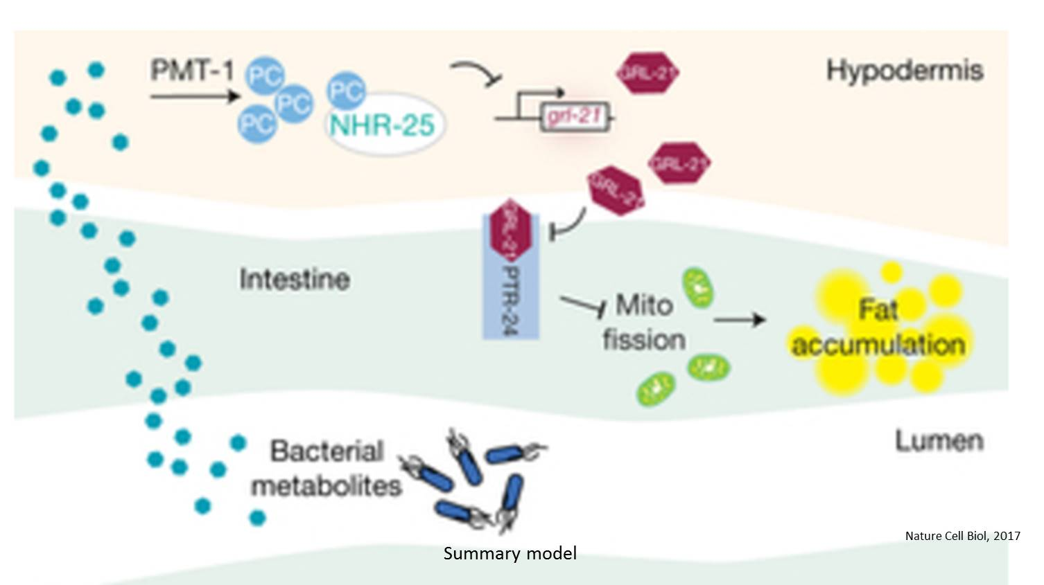 A new mechanism mediating environment-microbe-host interactions