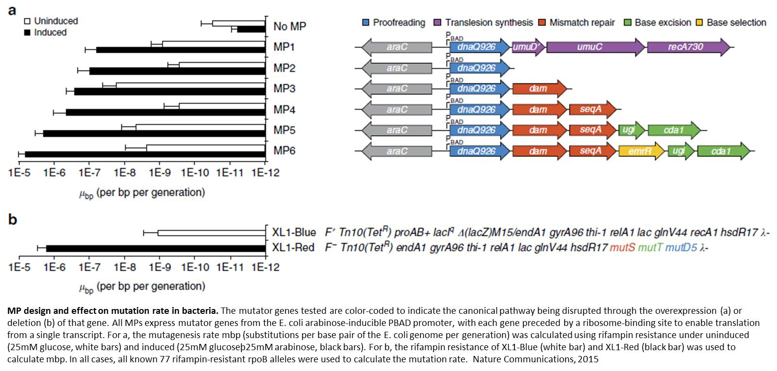 New efficient random DNA mutagenesis method!