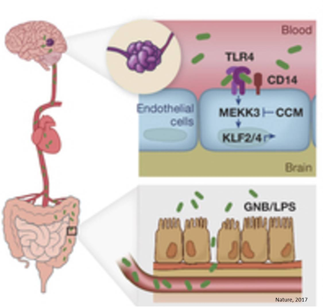 Relationship between common brain disease and gut microbiome identified!