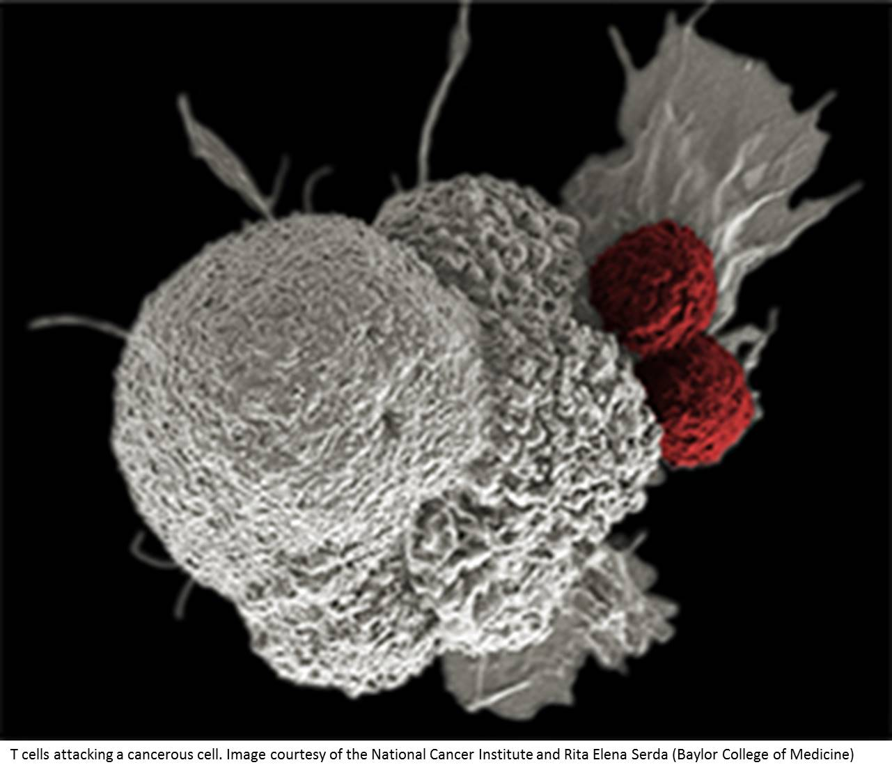 Migration of tumor-infiltrating immune cells