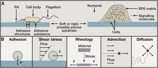 Preventing biofilm production by bacteria