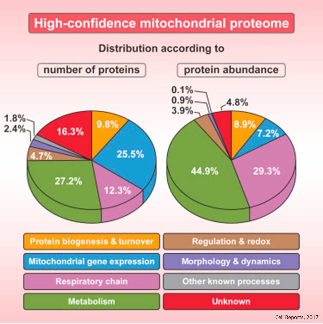 Unraveling yeast mitochondrial proteome!