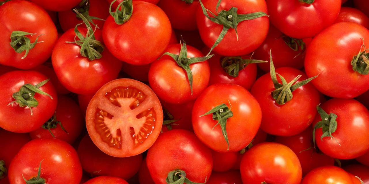 Diet rich in tomatoes cuts skin cancer in half in mice