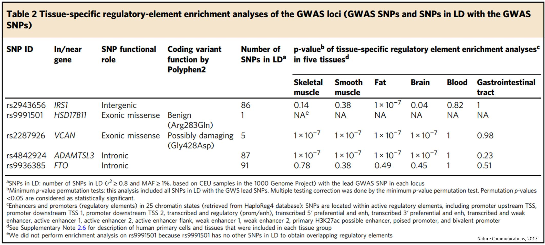 Genetics of lean body mass