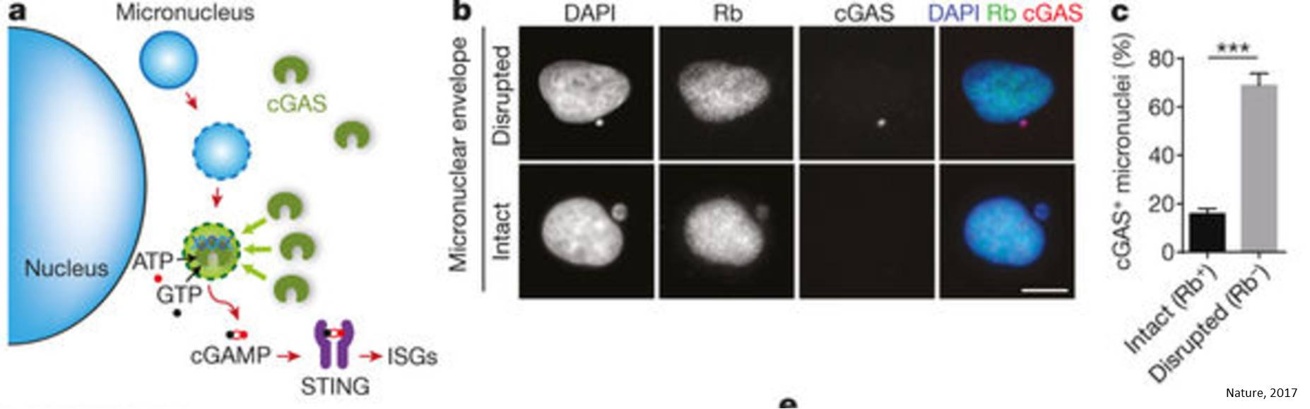 Detecting early DNA damage (cancer sign) by the cells!