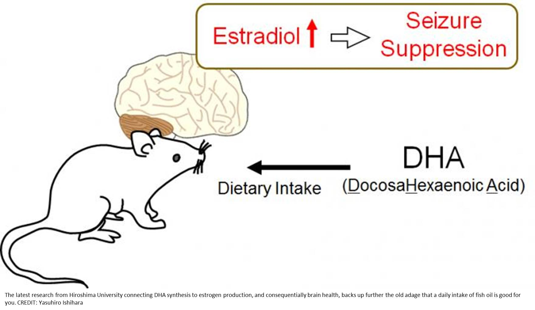 Fattyacids from oil reduces seizure occurrence!