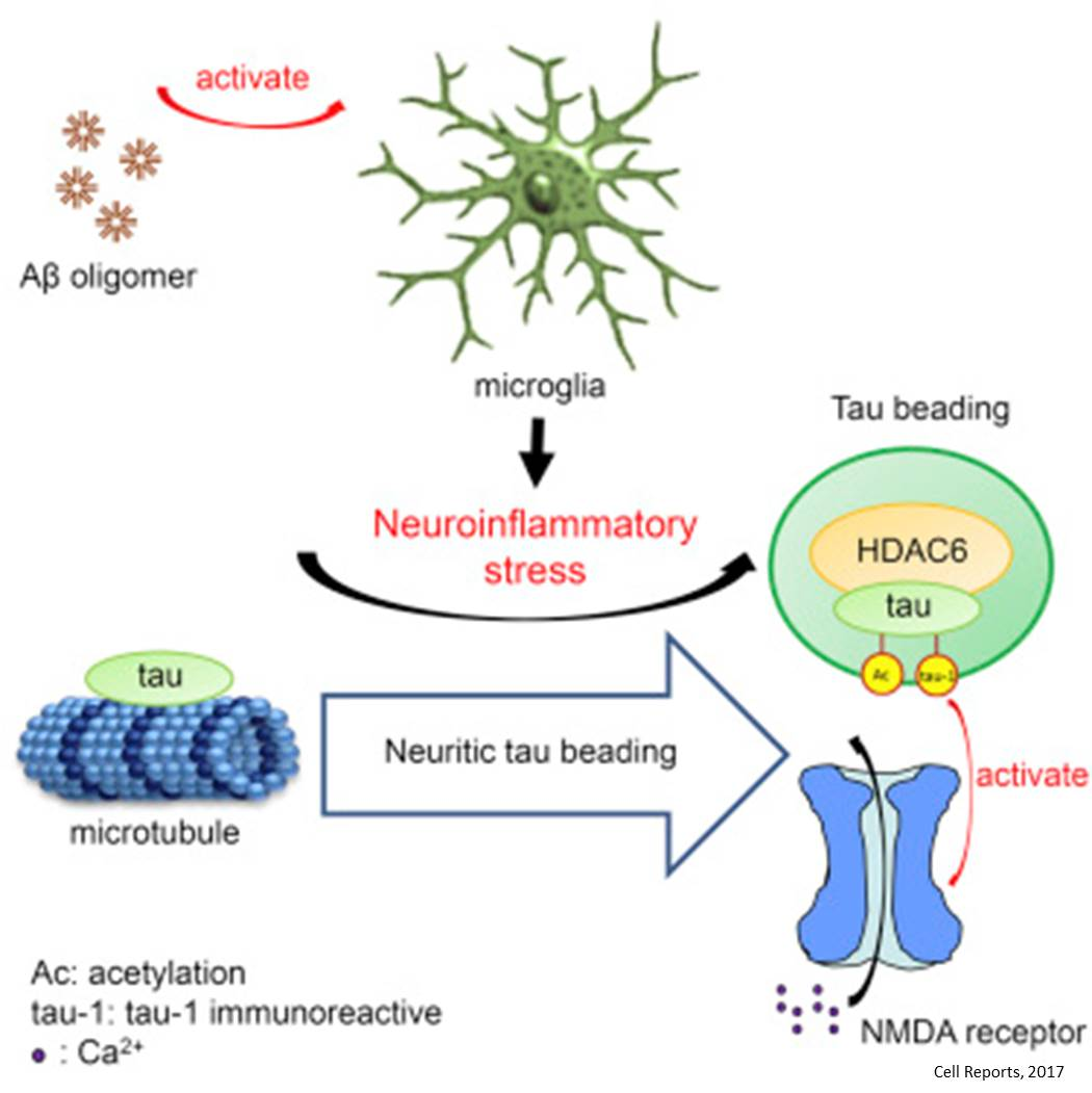 Is neuro-inflammation potential early-stage pathogenic mechanism in AD?