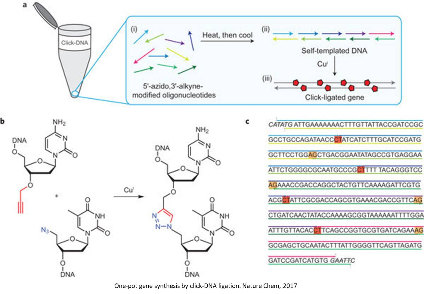 A new method of gene synthesis