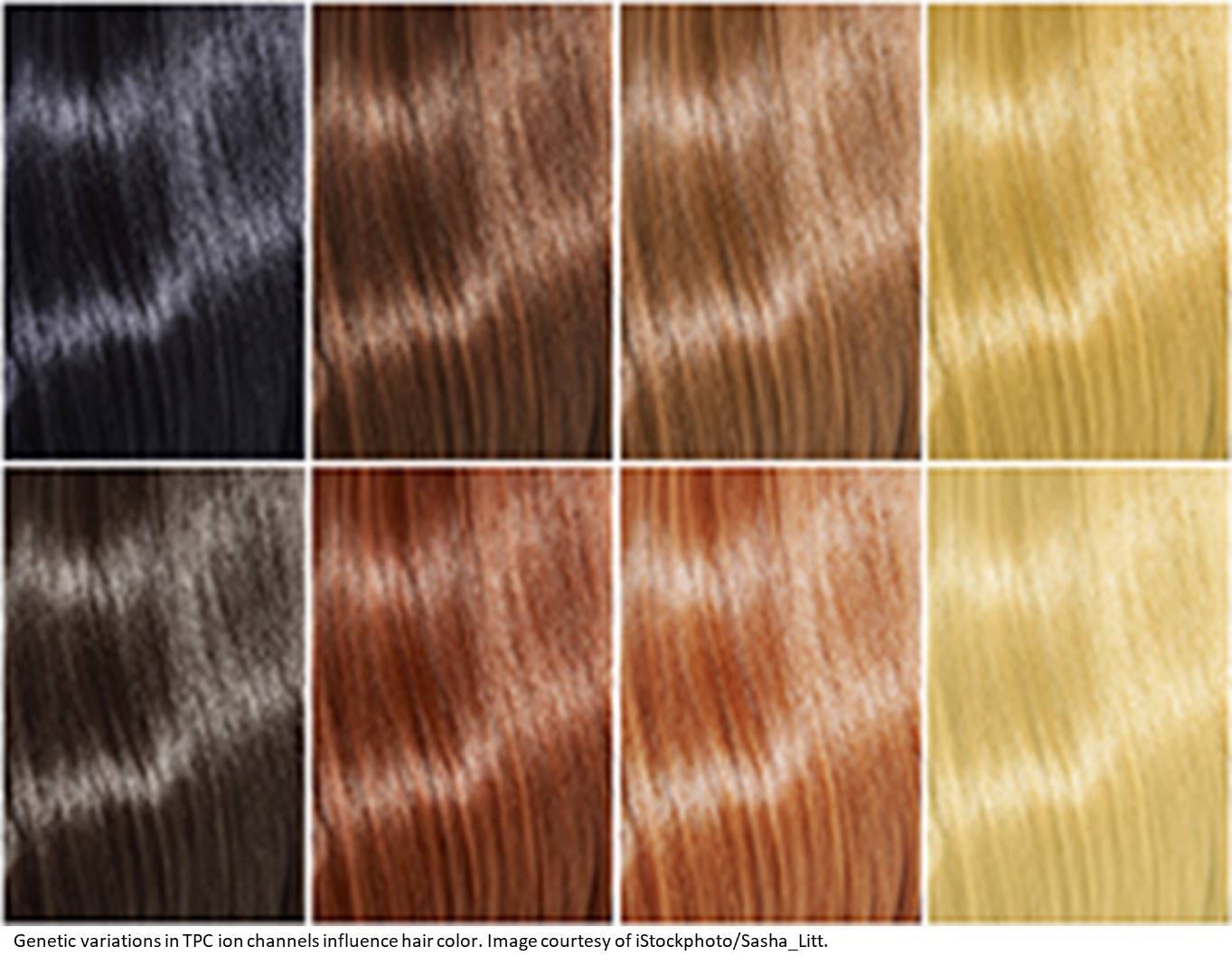 Genetic variations in ion channels influence human hair color