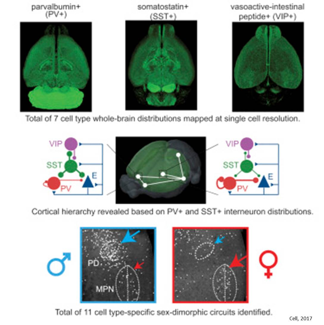 Mouse brain mapping!