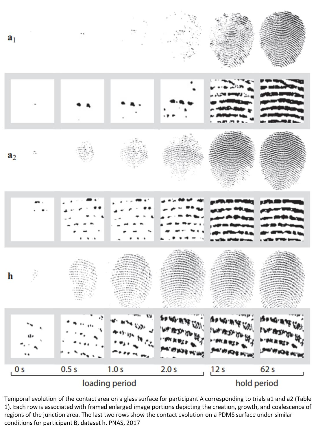 How fingers interact with surfaces