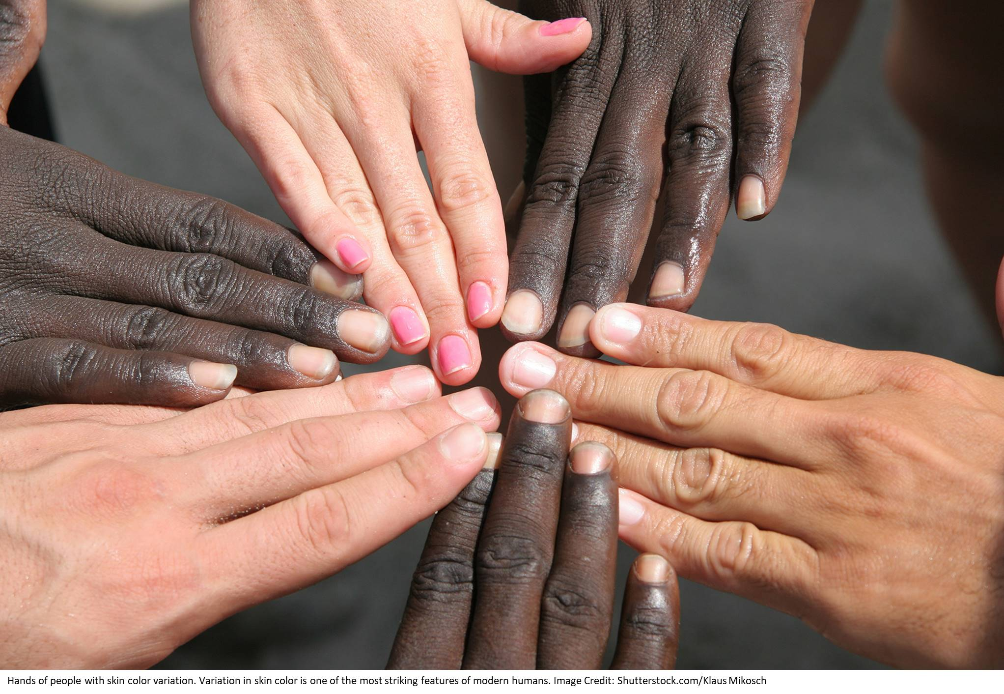 New regions of the human genome linked to skin color variation