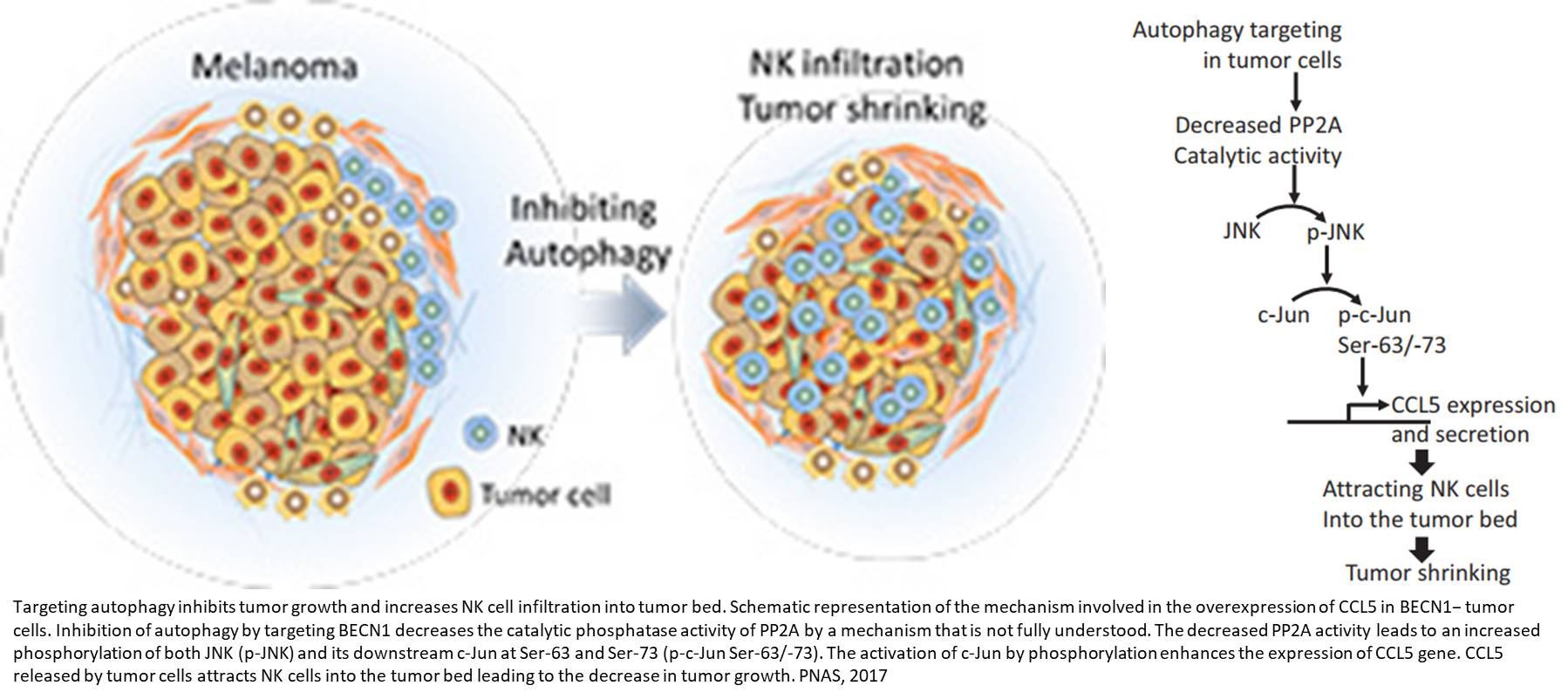 Targeting autophagy to block cancer growth!