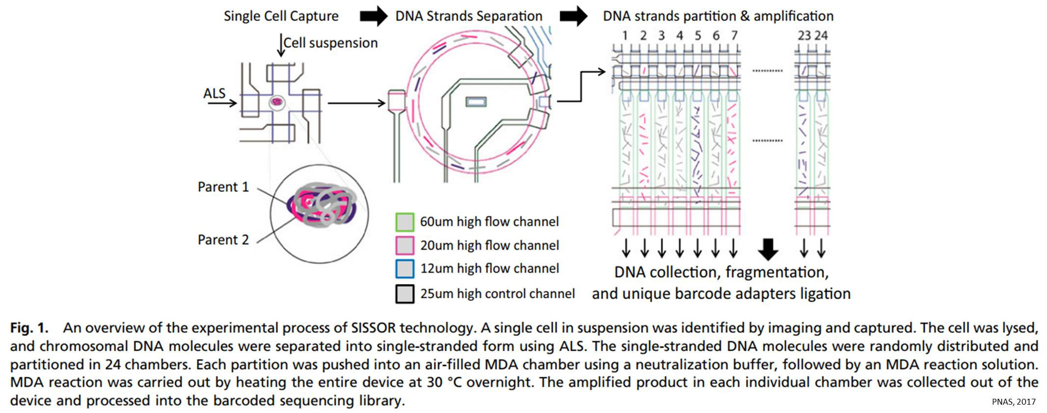 SISSOR to improve accuracy of single-cell genome sequencing