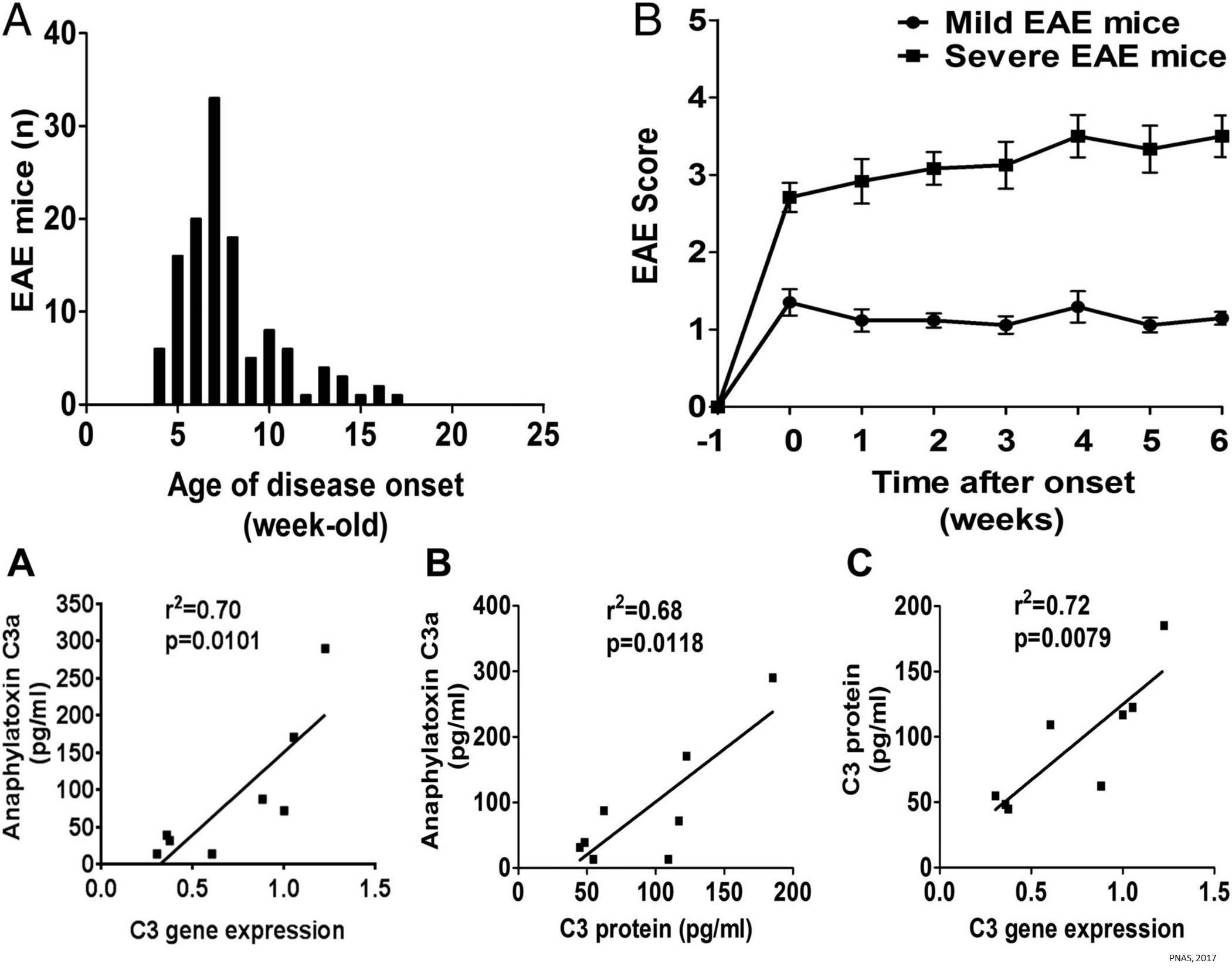 Age and gut bacteria contribute to MS progression!