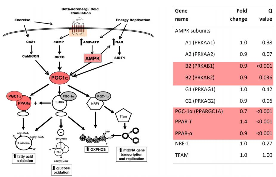 Role of cell membrane and tau interaction in Alzheimer's pathology