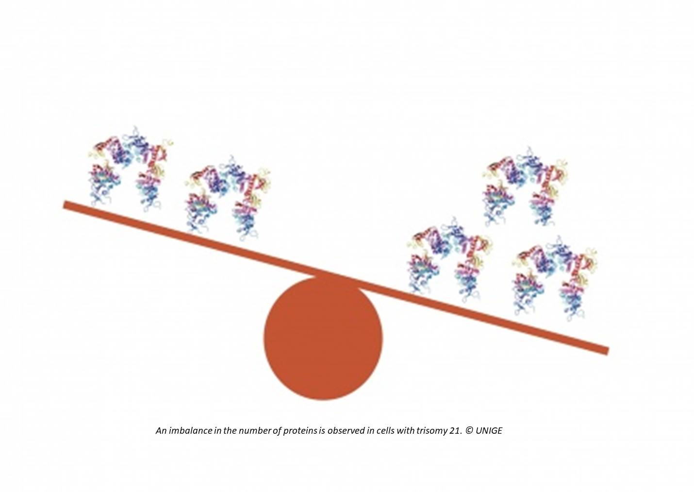 Uncontrolled protein de-regulation in cells may lead to trisomy-21symptoms