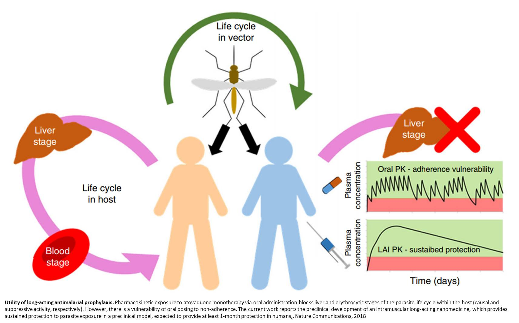 New long-acting approach for malaria