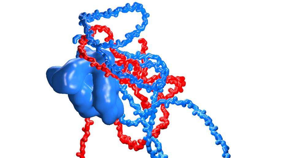 New interaction mechanism of proteins discovered
