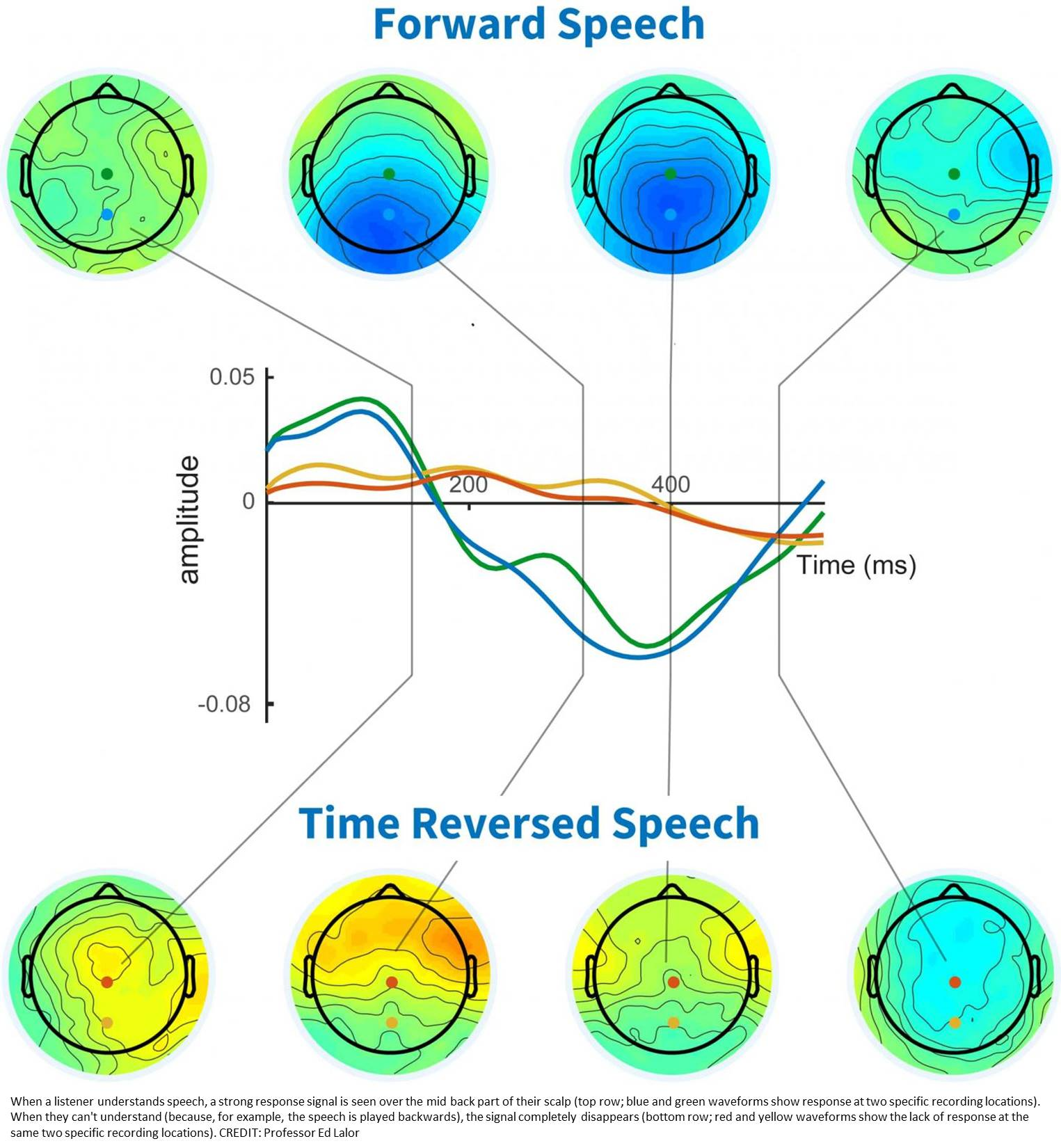 A brain signal that indicates whether speech has been understood discovered