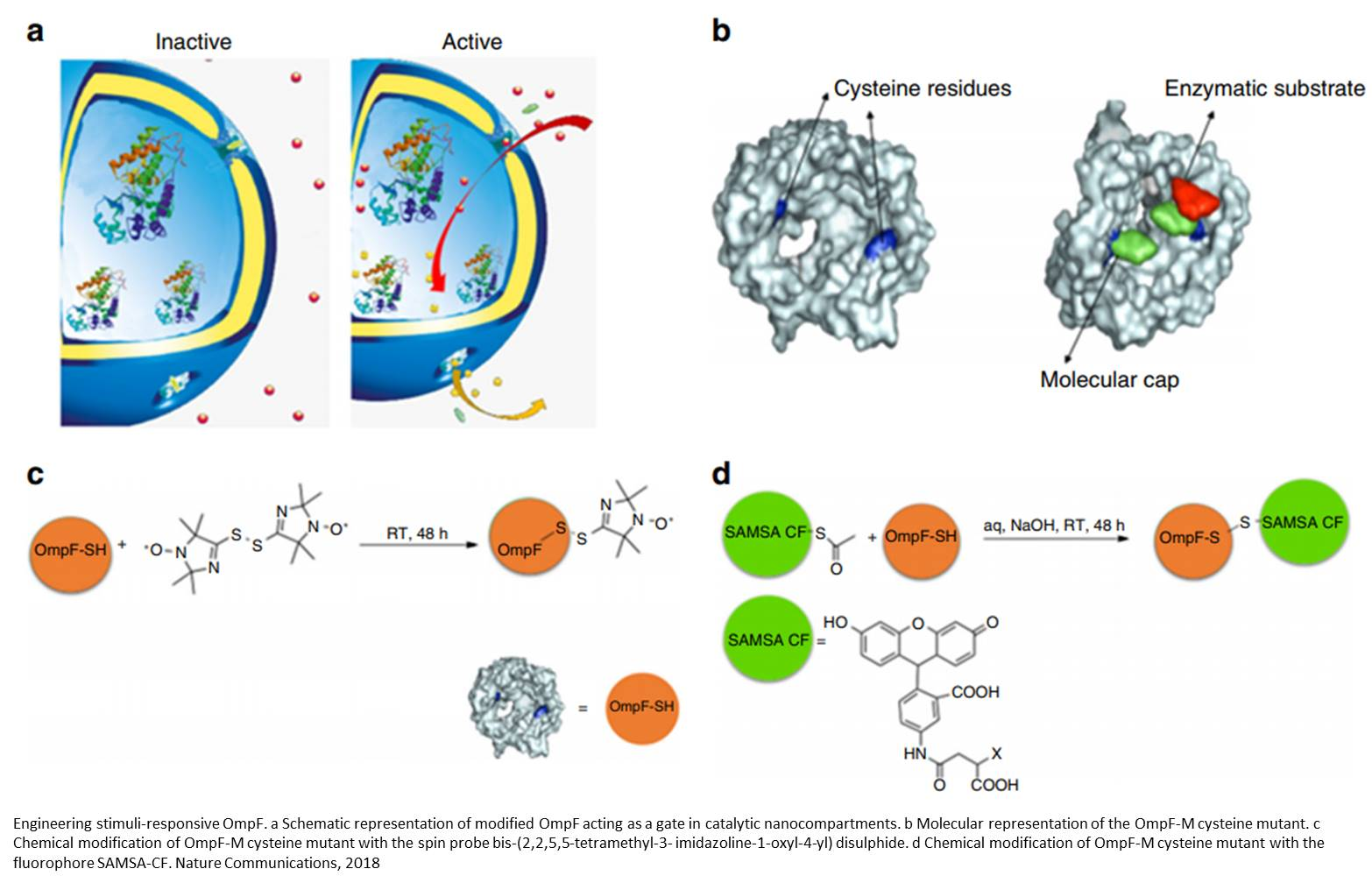 Artificial organelles for cells are functional in vivo