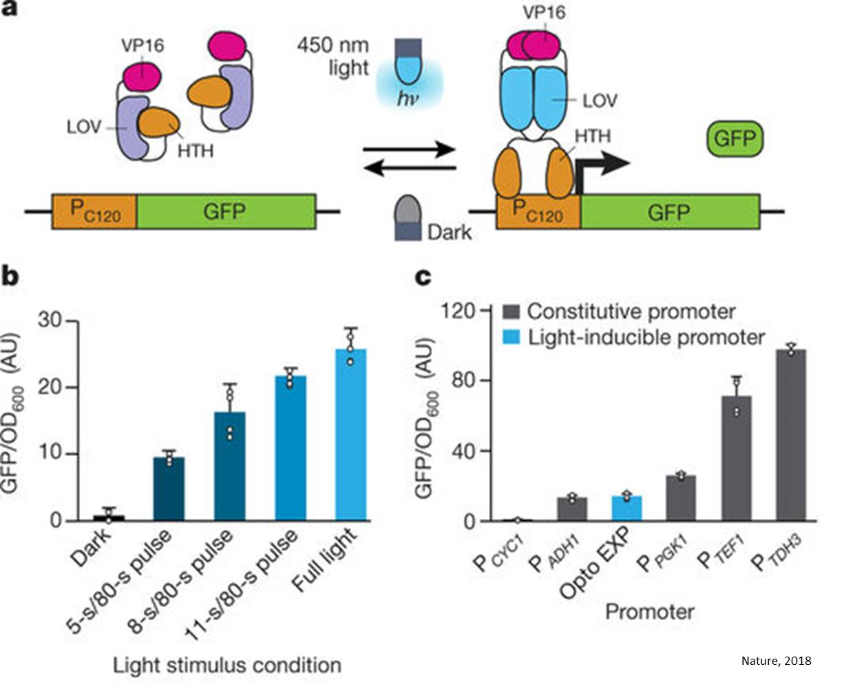 Using light to turn yeast into biochemical factories