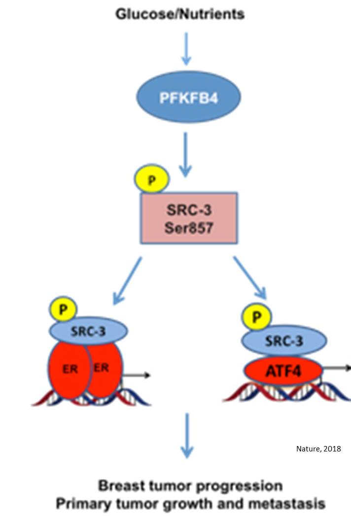 Connecting Warburg pathway to cancer