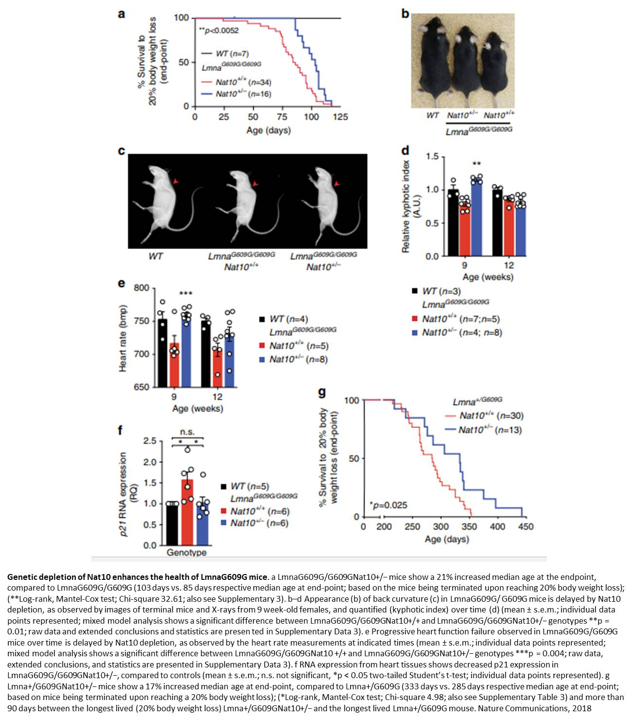 A new target for human accelerated aging syndrome,
