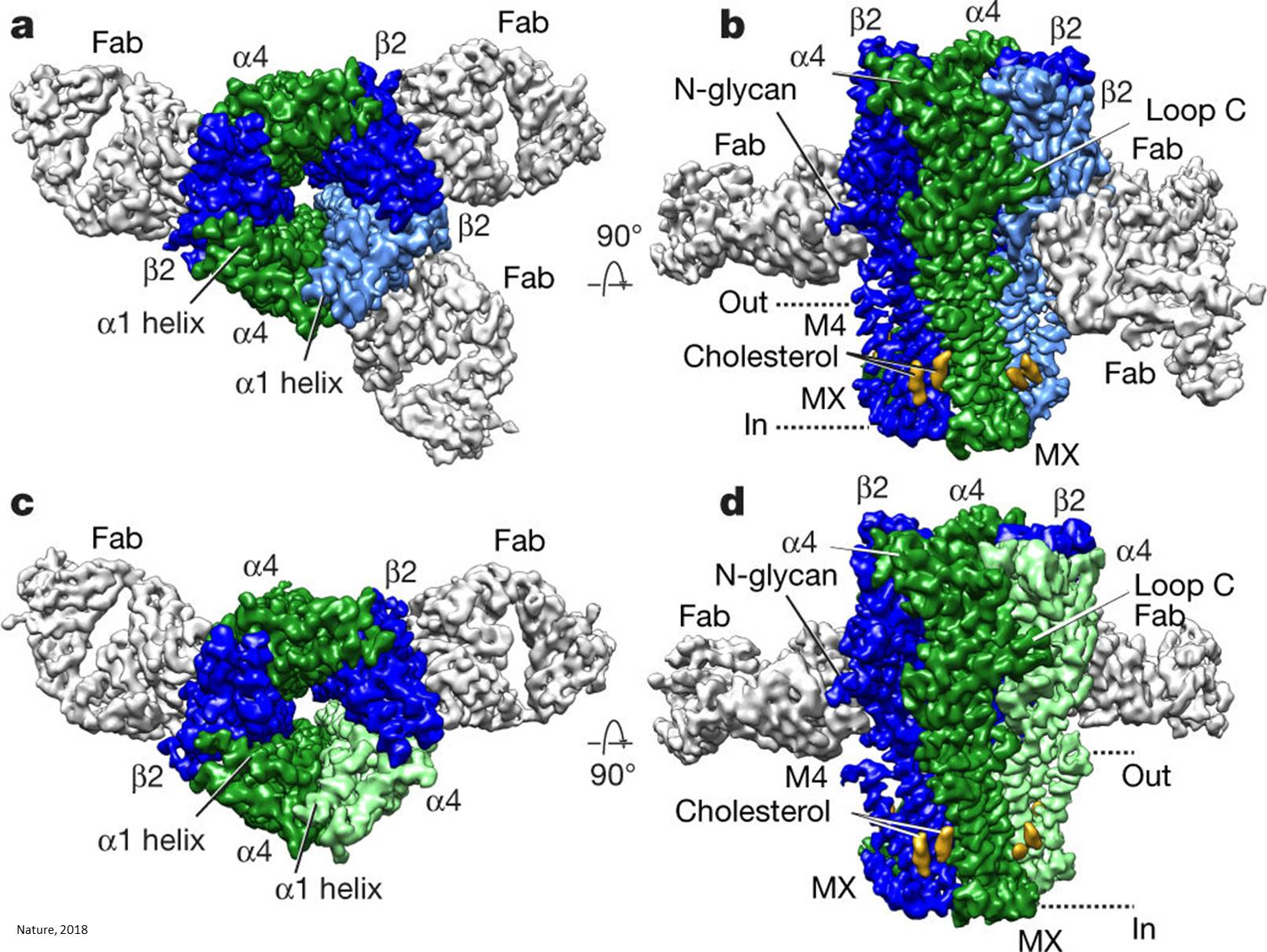 Crystal structure of nicotinic acid receptor unraveled!