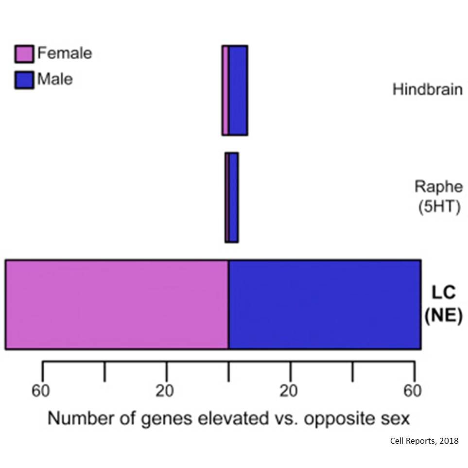 Sex difference in transcriptome of brain region implicated in anxiety behavior