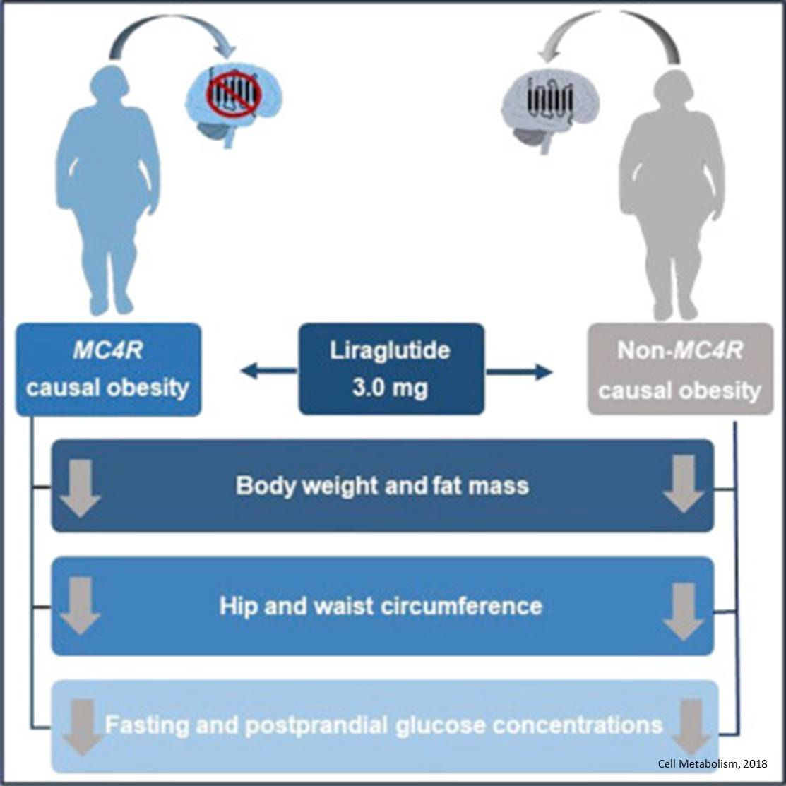 Treating genetic obesity