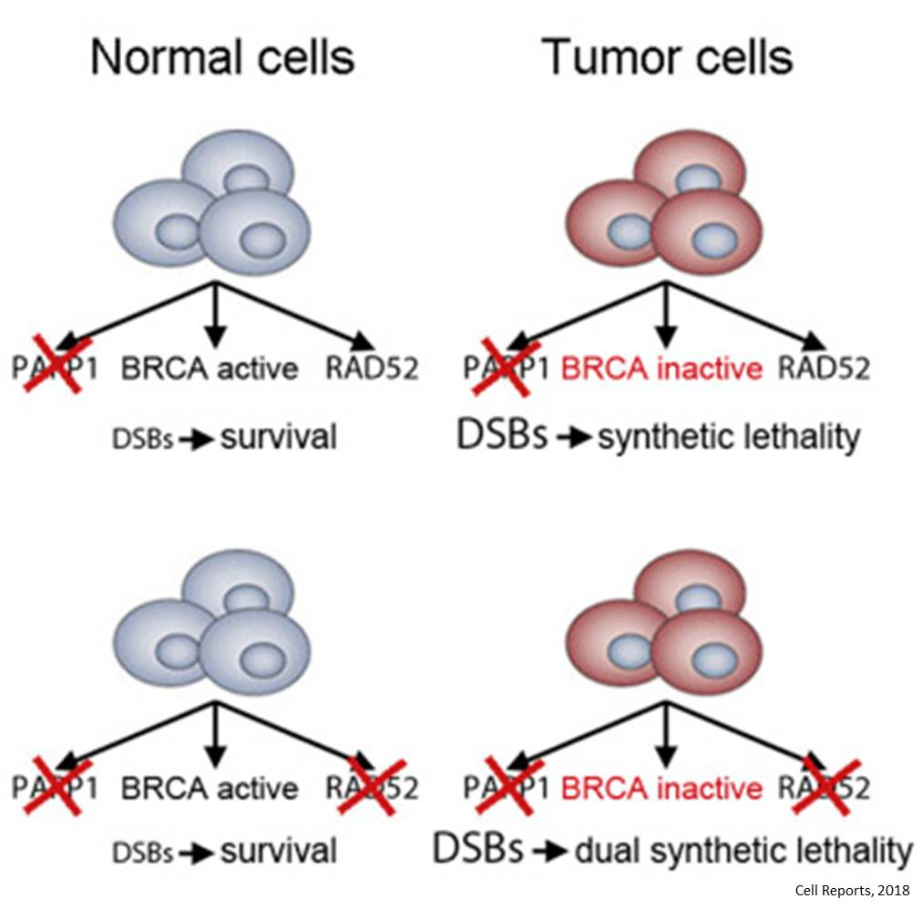 Targeting redundant DNA repair mechanisms to kill cancer cells!