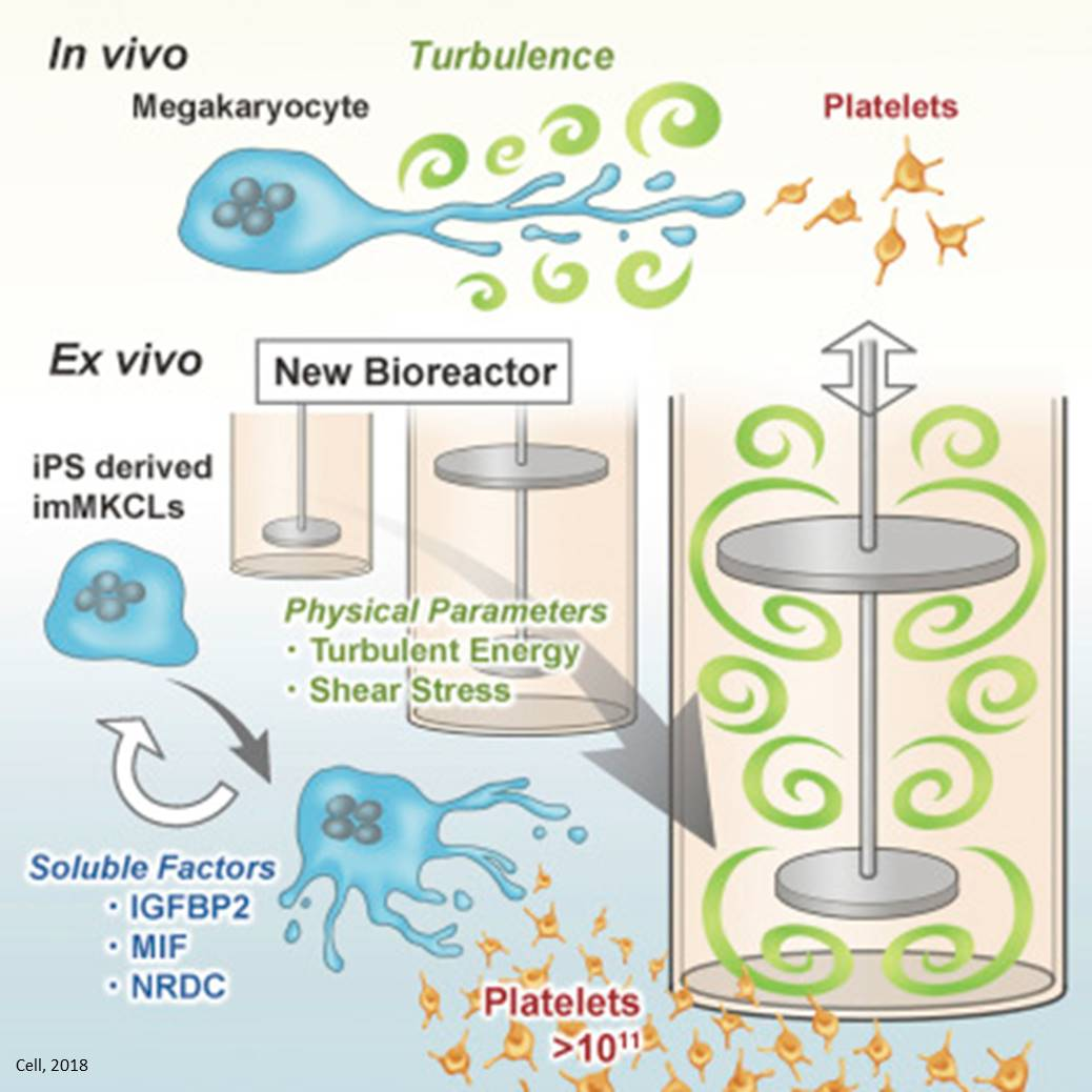 Turbulence is key for large scale platelet generation form iPSC