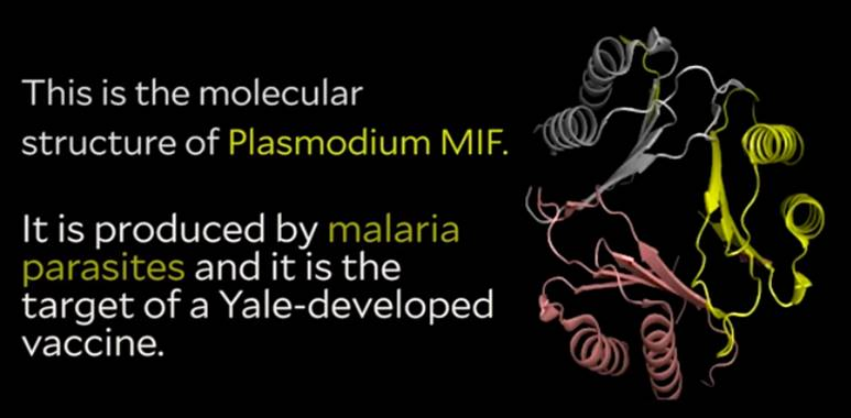 Targeting malaria protein to develop a vaccine