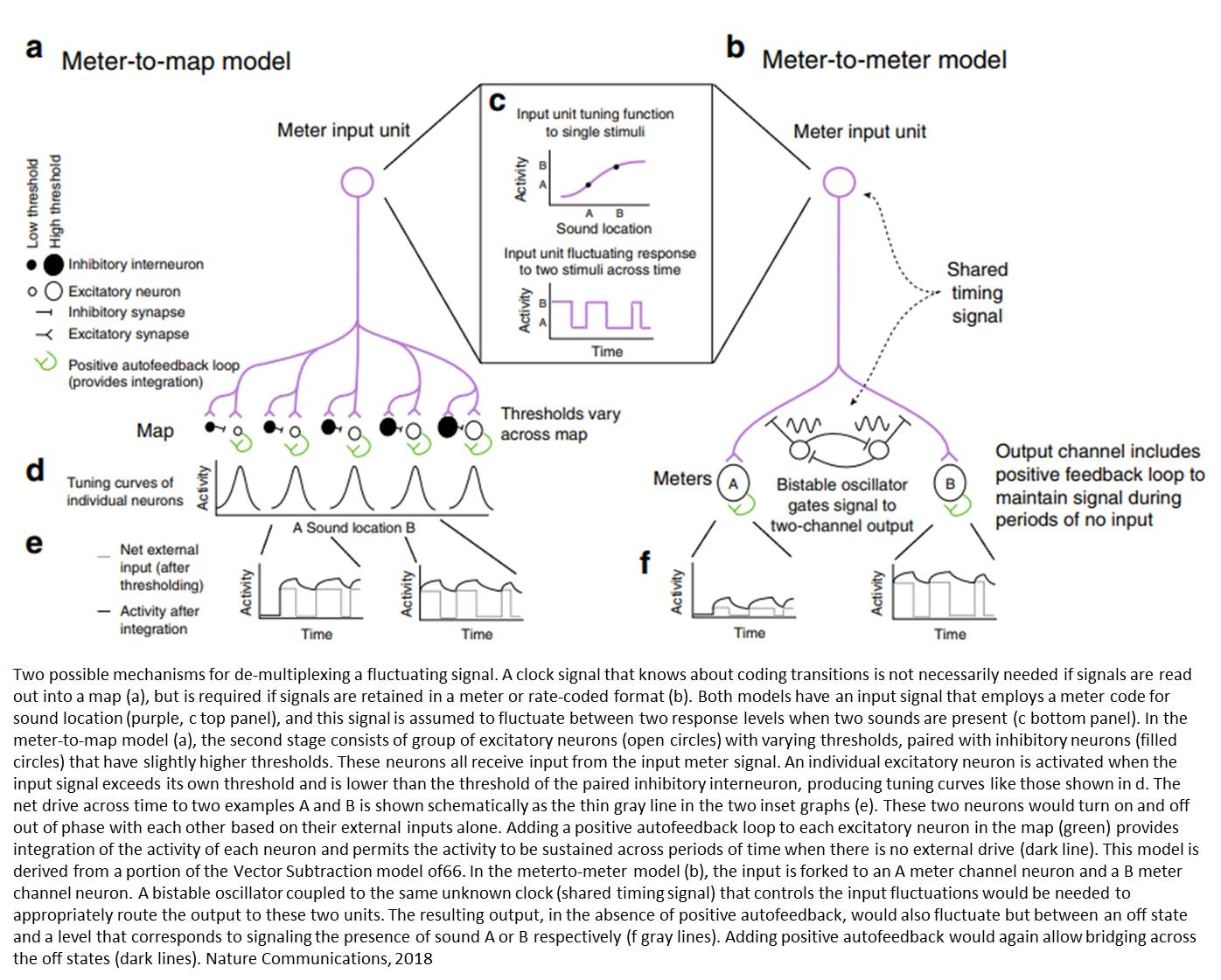 Neurons can transmit multiple signals simultaneously