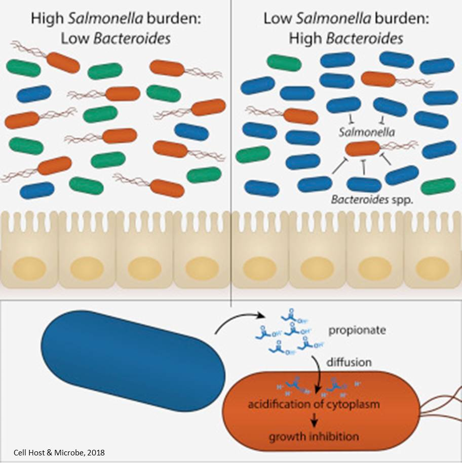 Gut bacteria byproduct protects against Salmonella