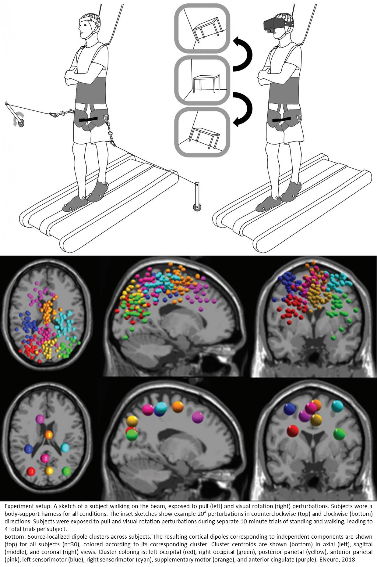 Neural signature of balance